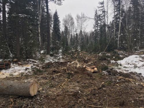 маникюр педикюр в батурино вырубили лес результаты: