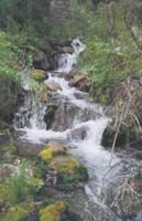 Ручей Страшного Лога. Близ впадения в Иню.  Фото: С.А. Бондаревская