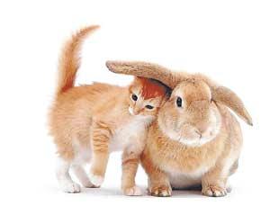 По китайскому (восточному) лунно-солнечному календарю 12-летнего животного цикла 2010 год белого Тигра сменит 2011-й год белого Кролика (Кота или Зайца).