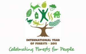 Наступил год лесов