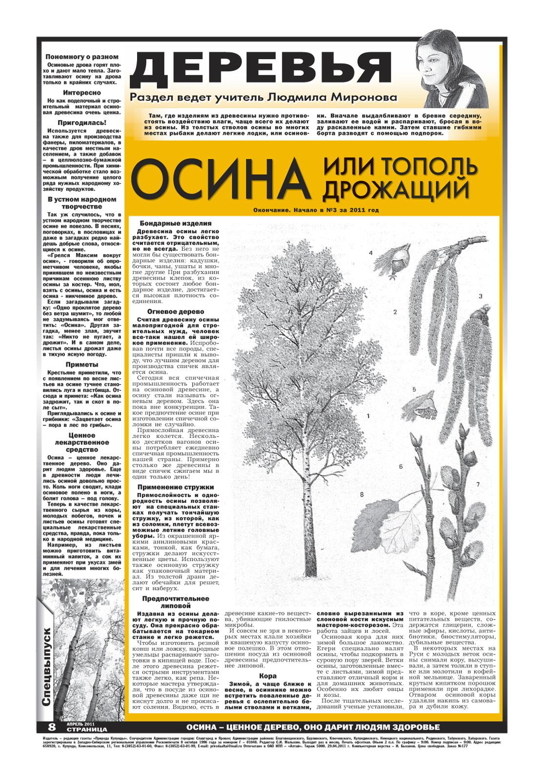 Деревья сибири осина или тополь
