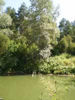 Река Повалиха