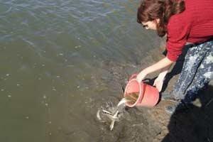 Акция по спасению молоди рыбы_Марискин И.