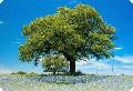 Деревья Сибири