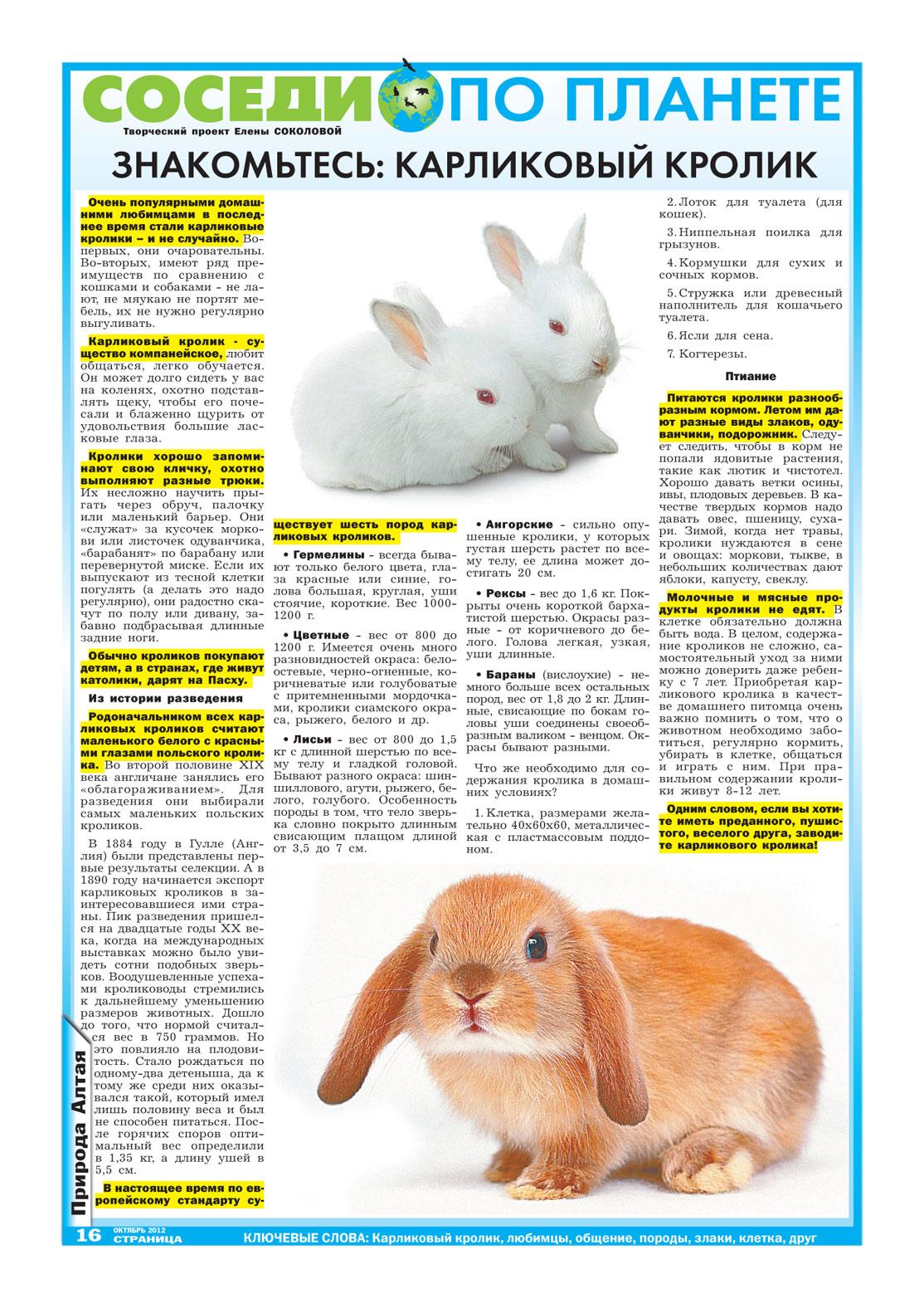 Декоративные кролики 74