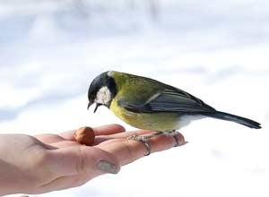 1 апреля. Международный день птиц