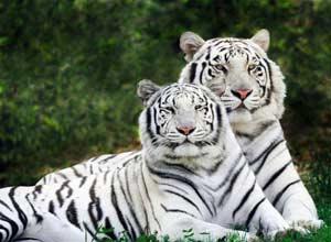 4 октября. Всемирный день защиты животных