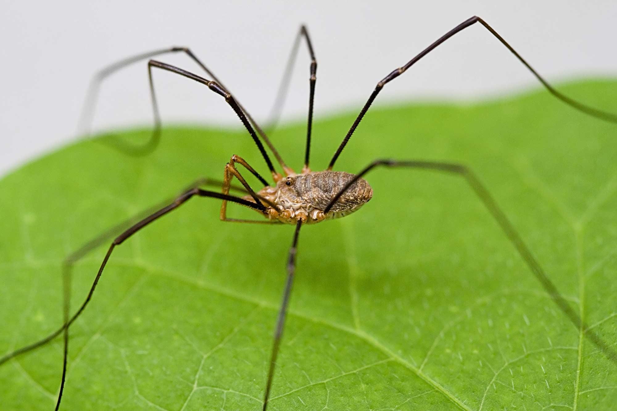 пауки сибири фото