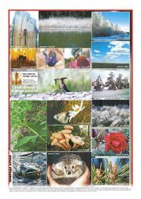 Последняя страница. Газета «Природа Алтая» №1-2 2013 г. (январь-февраль) 2013 год