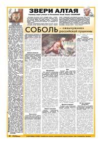 32 страница. Звери Алтая. Соболь – «жемчужина» российской пушнины