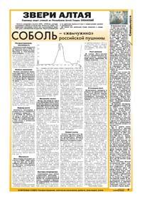33 страница. Звери Алтая. Соболь – «жемчужина» российской пушнины