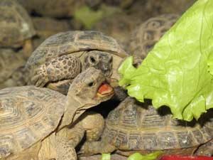 Черепахи. Фото Е. Панфило