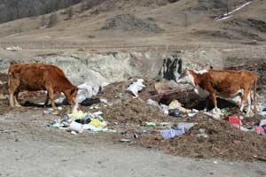 Нарушения природоохранного законодательства при эксплуатации объекта размещения отходов