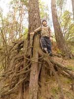 Дремучий лес (левобережье)