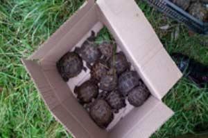 Черепахи. Фото: Яна Боцан