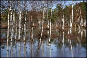 2 февраля. Всемирный день водно-болотных угодий