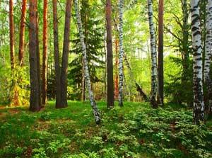 21 марта. Международный день леса