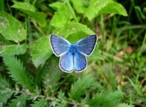 6 октября. Всемирный день охраны мест обитания