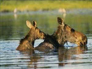 По факту браконьерства на территории Егорьевского заказника приняты жесткие меры