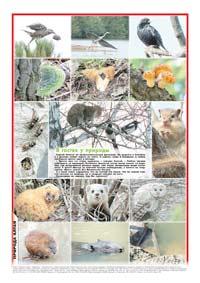 44 страница. Фотовыставка «В гостях у природы»