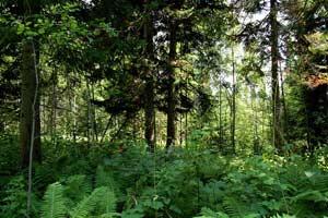 Леса – легкие планеты?