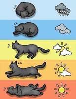 Синоптики погоды