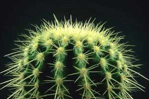 Удивительное растение