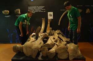 Участников экспедиции заинтересовала палеонтологическая коллекция музея