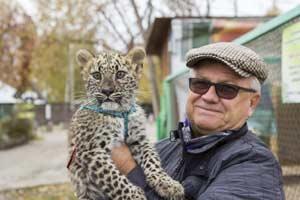 котёнок дальневосточного леопарда