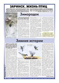 16 страница. Заринск. Жизнь птиц