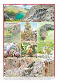 92 страница. Фотоколлаж «Работы с фотовыставки «Живая природа Алтая»