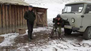 Около двух тысяч аргали насчитали учёные России и Монголии