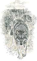 волки идут