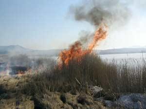 Пожар в тросниковых зарослях С Ирлица