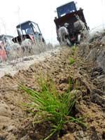 работа по восстановлению лесов на крупноплощадных горельниках