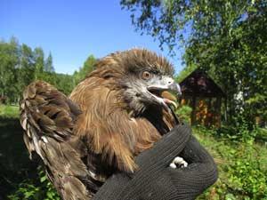 Реабилитационный центр для диких птиц