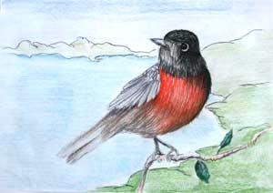 Краевой конкурс «Птица года»