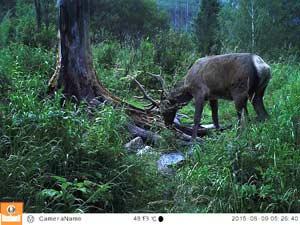 снимки животных с фотоловушек
