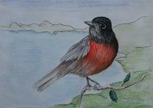 Птица с огненным хвостом. Рисунок Кристины Квасовой