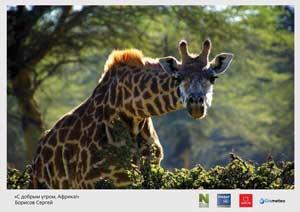 «С добрым утром, Африка». Фото: Сергей Борисов