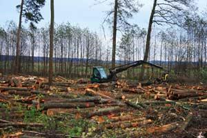 Рубки лесов