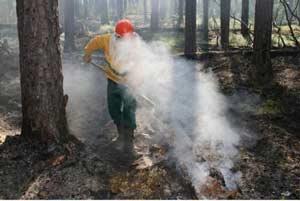Ликвидировано 40 лесных пожаров
