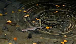 О мерах по предотвращению замора рыбы