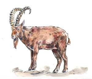 козёл