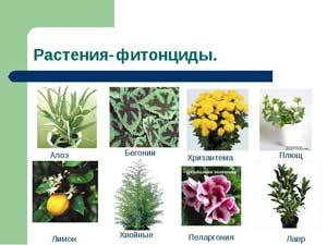 Как цветы защищают себя и хозяина?