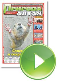 Газета «Природа Алтая» №10 (октябрь) 2013 год в интерактивном режиме